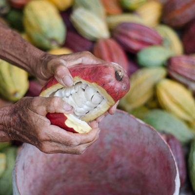 Oriado : Découvrez l'histoire de notre chocolat Bio et Equitable