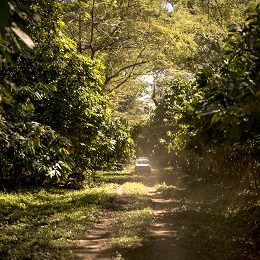 plantation millot valrhona