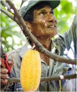 Recolte Pérou cacao Valrhona Ensemble